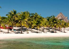 beautiful palm trees along the beaches in costa maya