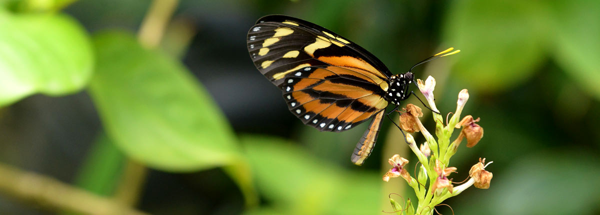 glimpse of beautiful butterflys in the caribbean