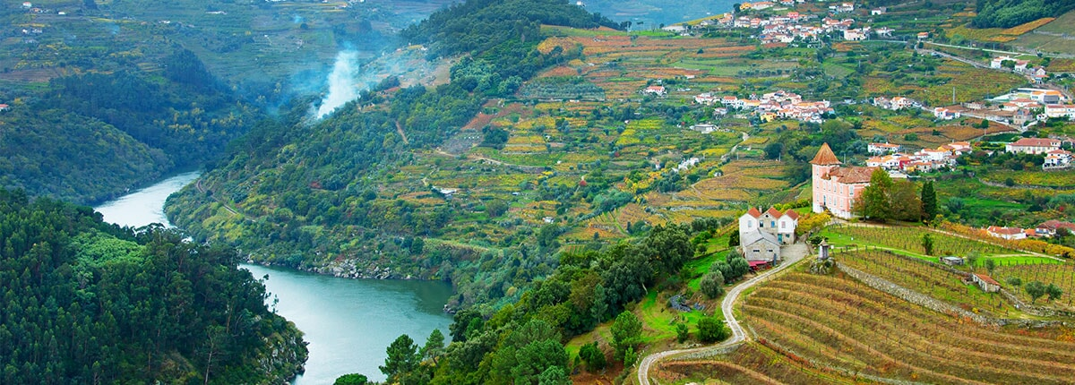 vineyards in douro valley in porto, portugal