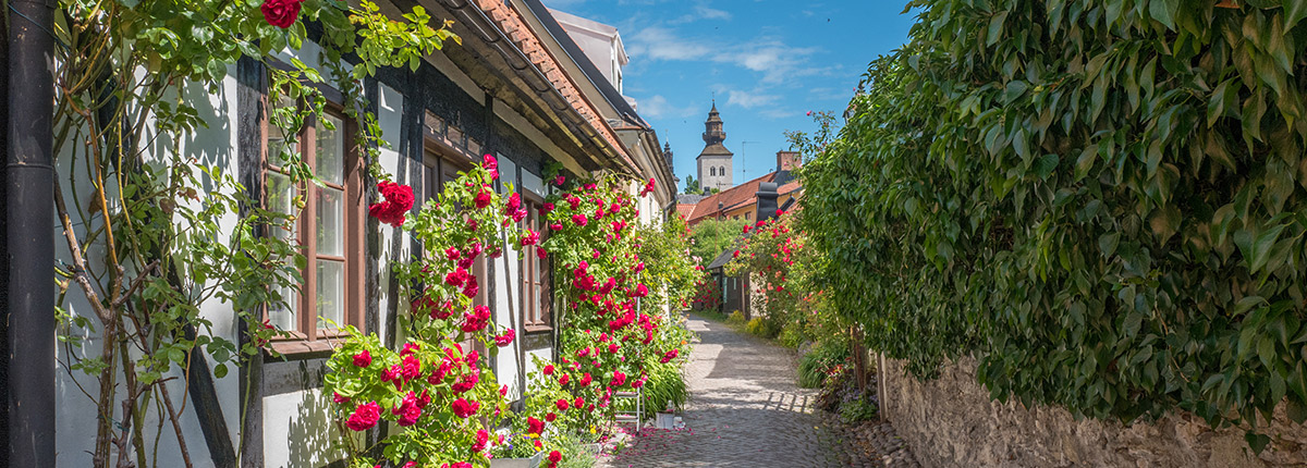visby's street lined with beautiful flowers and medieval buildings