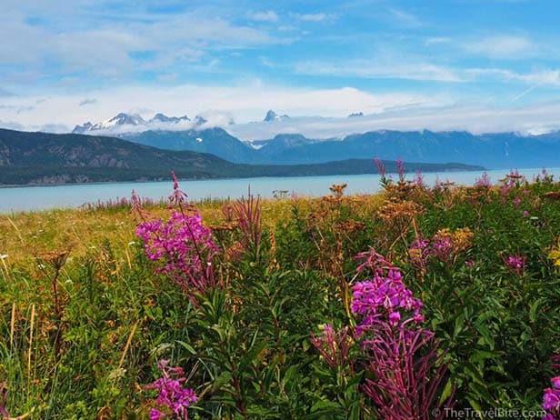TheTravelBite_RachelleLucas_AlaskaWildernessSafari-21-1000x750
