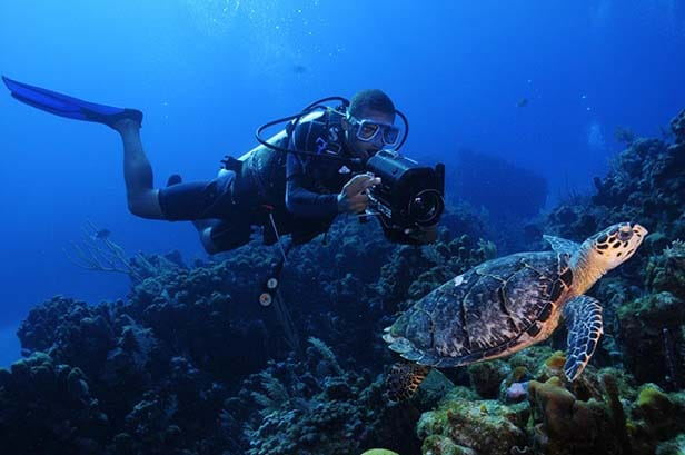 scuba diver next to a turtle