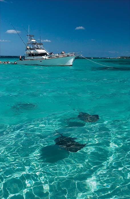 two stingrays next to a boat