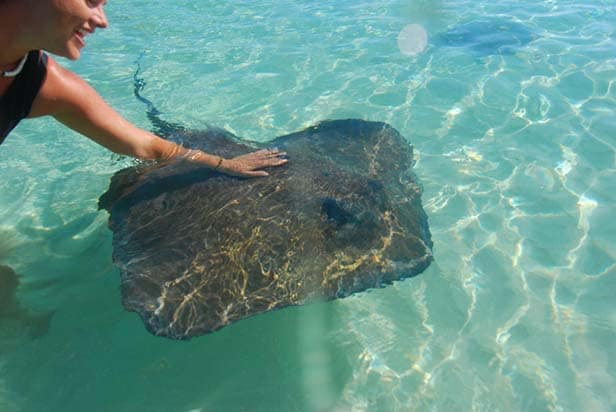woman petting a stingray