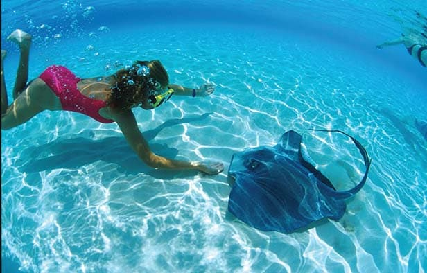 a woman diving next to a sting ray in grand cayman