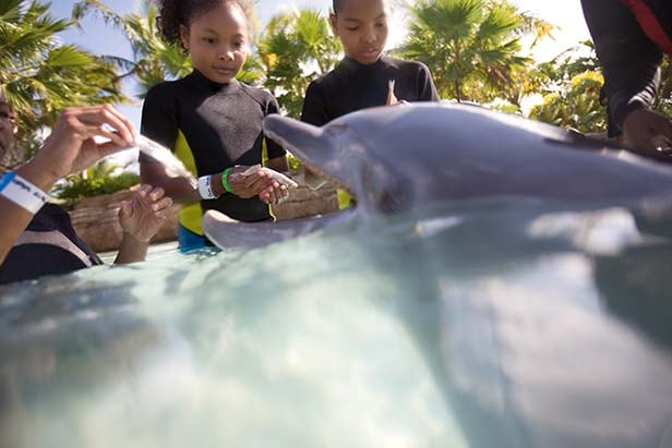 two kids feeding fish to a dolphin
