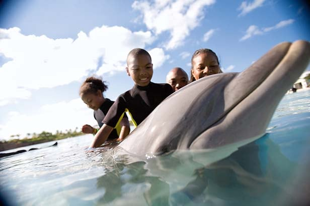 group of kids swimming with a dolphin