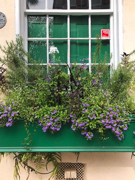 Close up of green window box with purple flowers in Charleston