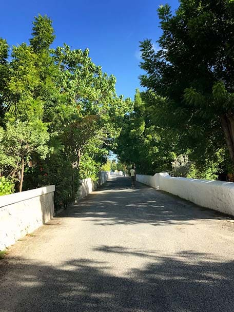 View of a paved street with trees hanging over the road in Grand Turk