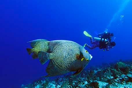 scuba diver next to a tropical fish in cozumel