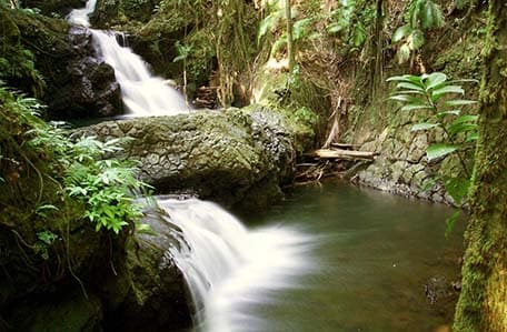 waterfall in the tropical botanical garden of hilo hawaii