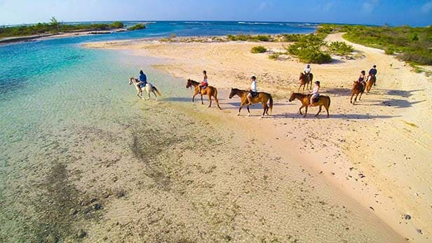 group of people going on a horseback ride along the beach