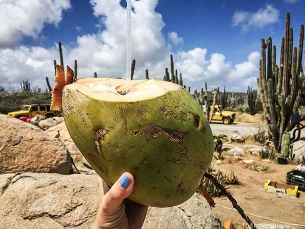 Hand holding a coconut with fresh coconut water in Aruba