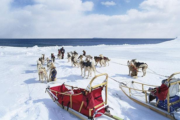 Dog sleds in Alaska