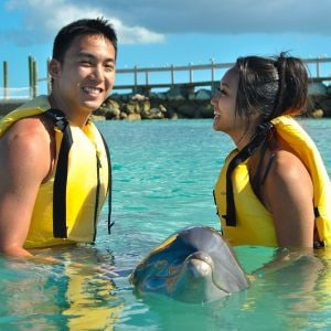 young couple meet with a dolphin