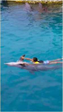 daughter swimming w dolphins
