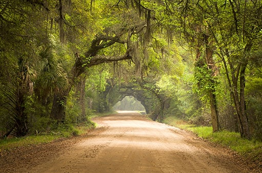 a dirt road in Charleston surrounded by beautiful green trees