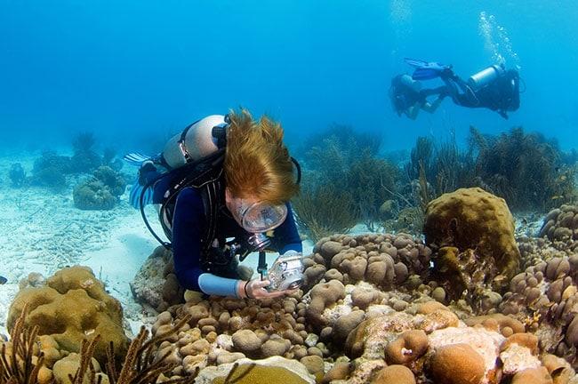 woman scuba diving in bonaire