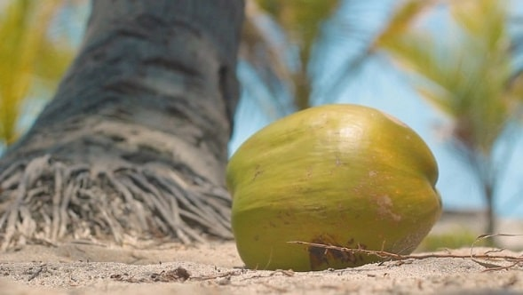 island coconut flavor from cozumel