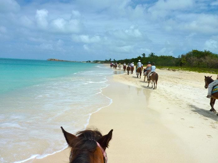 a line of guests riding on horseback on the beaches of antigua