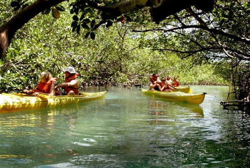 groups of two people kayaking through lucayan nation park in freeport
