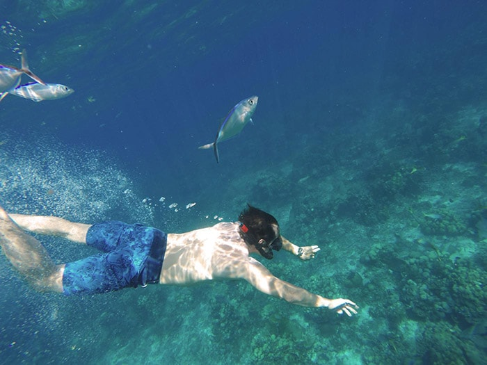man snorkeling with fishes along the dominican coast line