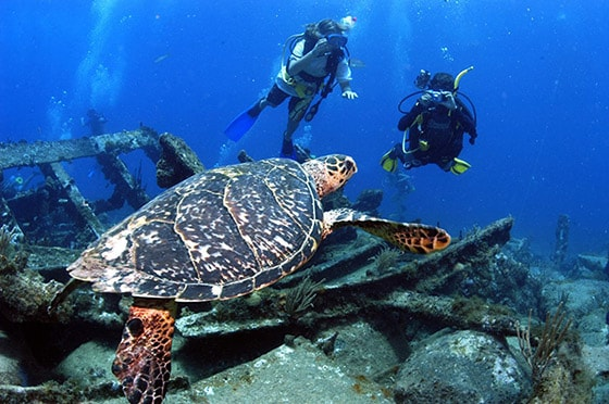man and woman taking pictures of turtle while scuba diving a ship wreck