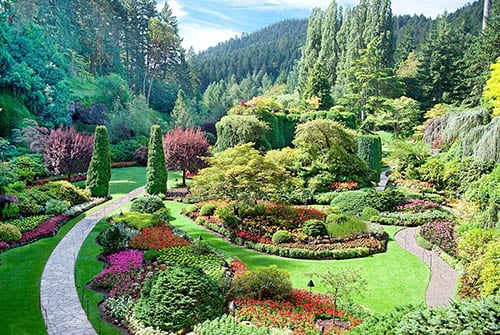 lush butchart gardens in victoria, bc, canada