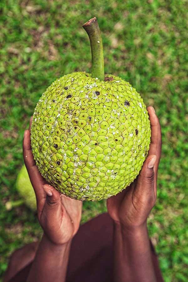woman holding a breadfruit from st lucia