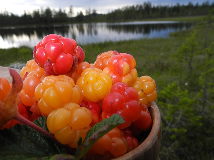 red, orange, and yellow berries in a basket with a lake in the background