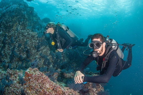 man and woman scuba diving near a reef off the coast of cabo san lucas
