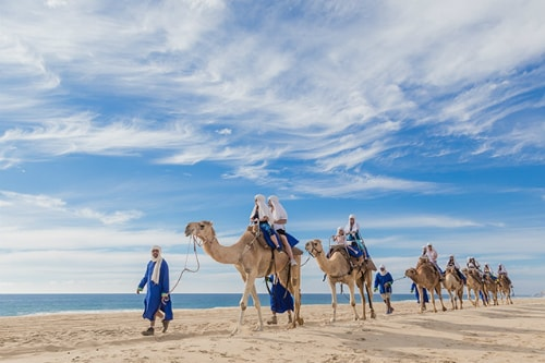 visitors riding a camels along a beach in mexico with the assistance of a guide