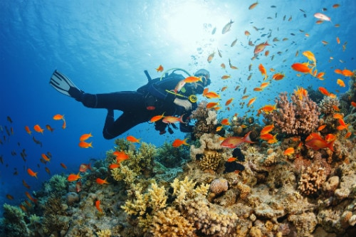 man scuba diving in the meso american barrier reef among hundreds of colorful sea life