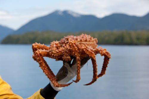 man holding an orange alaskan crab off the shore of ketchikan