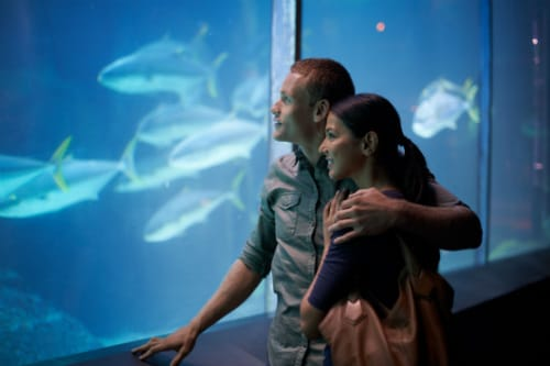 couple looking at fishes through a glass aquarium in maui