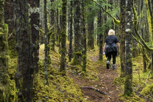 woman hiking through the tongass rain forest in alaska
