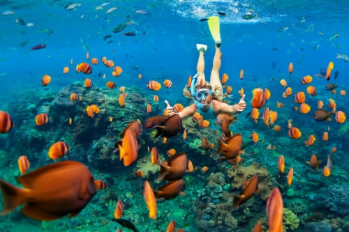 woman giving a thumbs up as she snorkels along a school of orange fish in kona hawaii