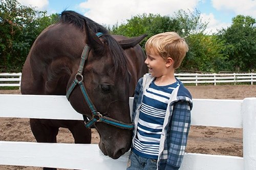little boy petting a horse in half moon cay