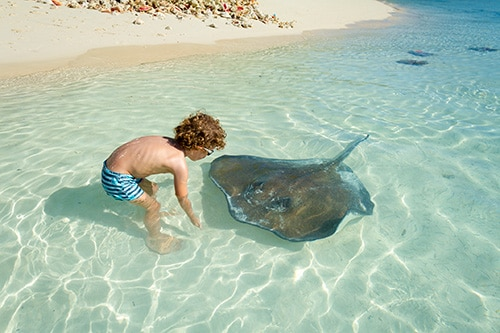 little boy playing with a stingray on a beach in grand cayman