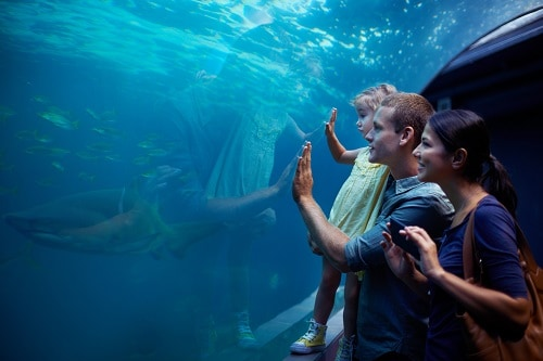 family of 3 looking at a shark through a glass at the local aquarium in tampa