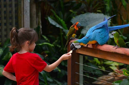 little girl feeding a parrot in the jacksonville zoo