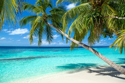 beautiful beach with palm trees and crystal clear waters in the bahamas