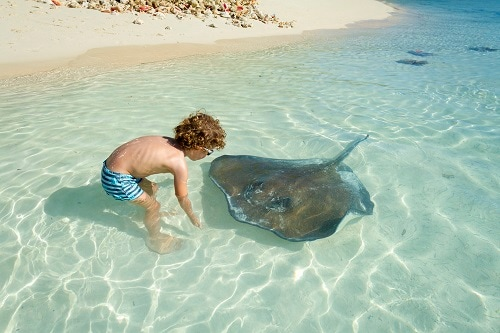 boy playing with a stingray on a half moon cay beach