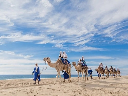 group of visitors on a camel ride across a mexican beach in cabo san lucas