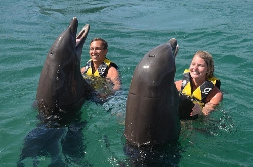 couple holding the fins of 2 dolphins during an excursion in amber cove