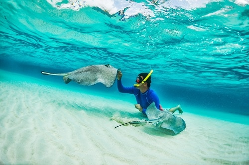 man snorkeling with stingrays in half moon cay