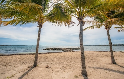 3 palm trees overlooking the balmoral island beach in nassau bahamas