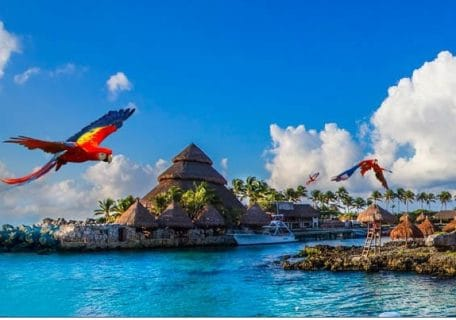 Top 10 Cozumel Shore Excursions You Have to Experience