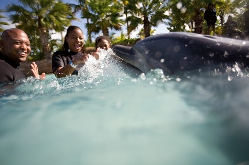 parents and their daughter swimming with a dolphin in nassau bahamas