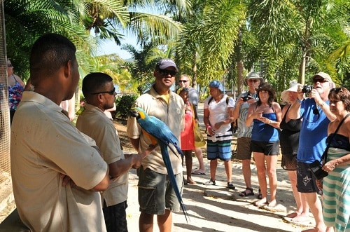 group of people on a roatan tour looking at an exotic bird